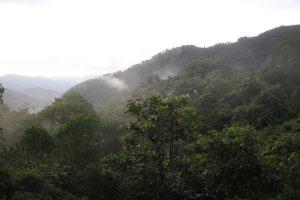 Minca View