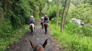 Horseback Ride, Jardin