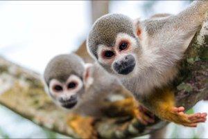 Monkey Sanctuary, Amazonas