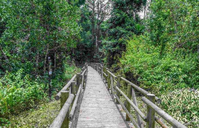 Trail, Pacific Coast
