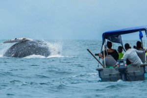 Nuqui Whales, Pacific Coast