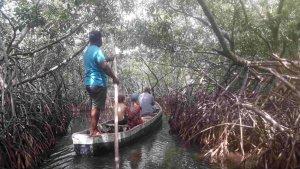 Mangrove Tour, Cartagena