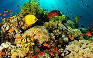 Rosario Islands Sealife