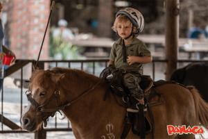 PANACA Horse Carousel