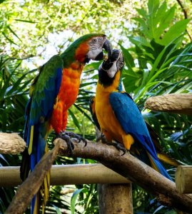 Cartagena national Aviary
